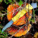 Mushroom knives